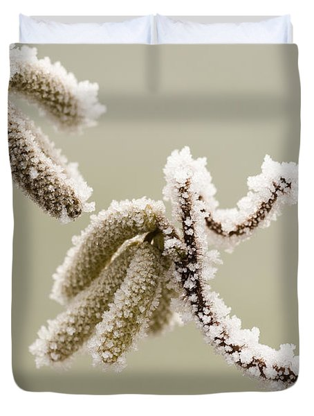 Crunchy Catkins Duvet Cover by Anne Gilbert