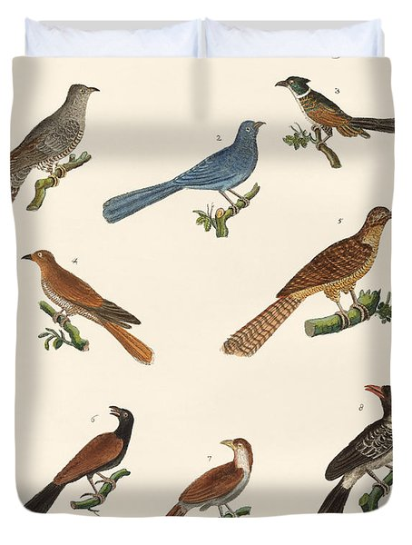 Cuckoos From Various Countries Duvet Cover by Splendid Art Prints