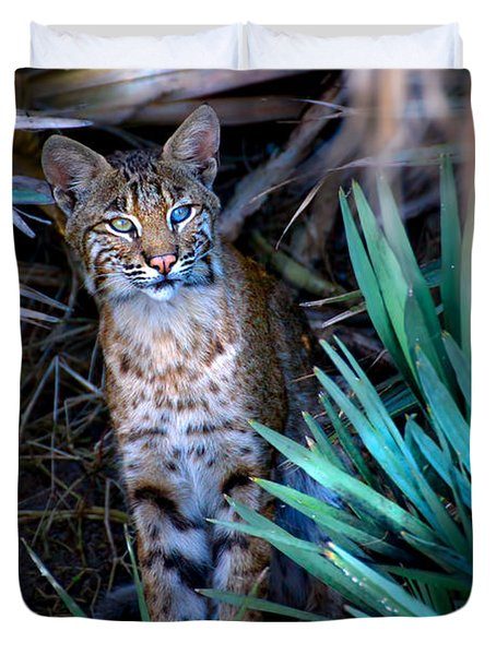 Curious Bobcat Duvet Cover by Mark Andrew Thomas