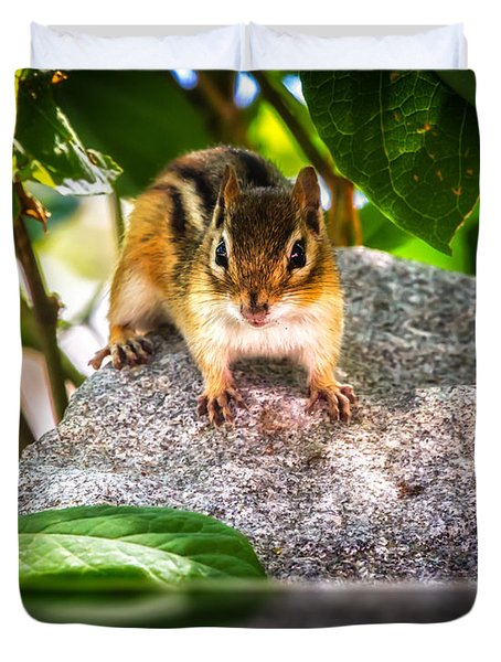 Curious Chipmunk  Duvet Cover by Bob Orsillo