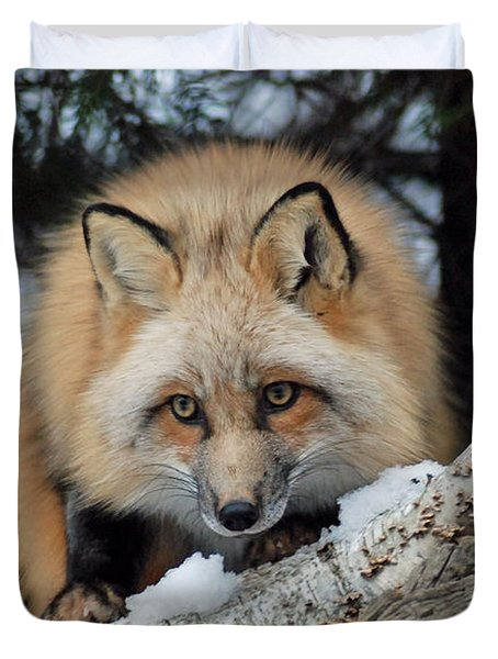 Curious Fox Duvet Cover