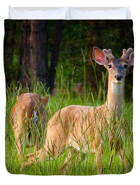 Curious Duvet Cover by Linda Unger
