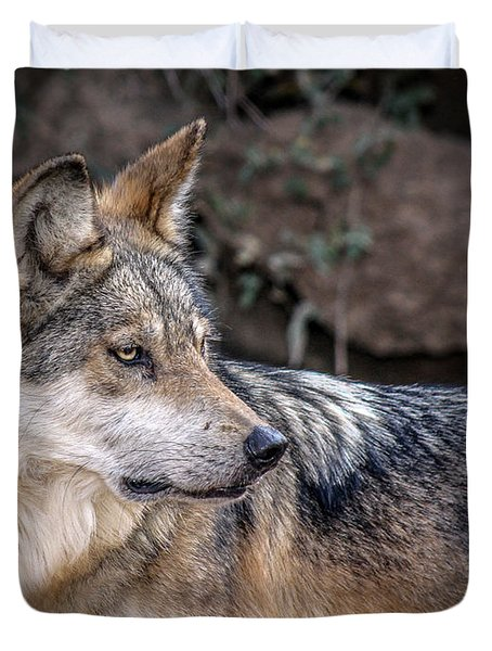 Duvet Cover featuring the photograph Curious Mexican Grey Wolf by Elaine Malott