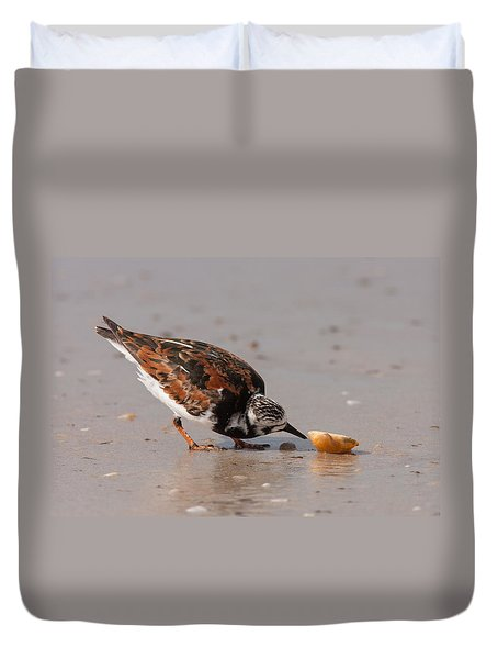 Duvet Cover featuring the photograph Curious Turnstone by Paul Rebmann