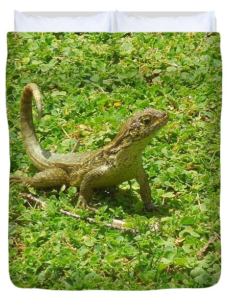Curly-tailed Lizard Duvet Cover by Ron Davidson