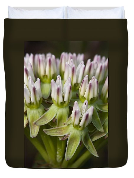 Curtiss' Milkweed #1 Duvet Cover by Paul Rebmann