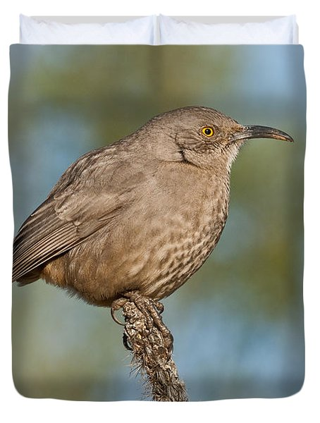 Curve-billed Thrasher Duvet Cover