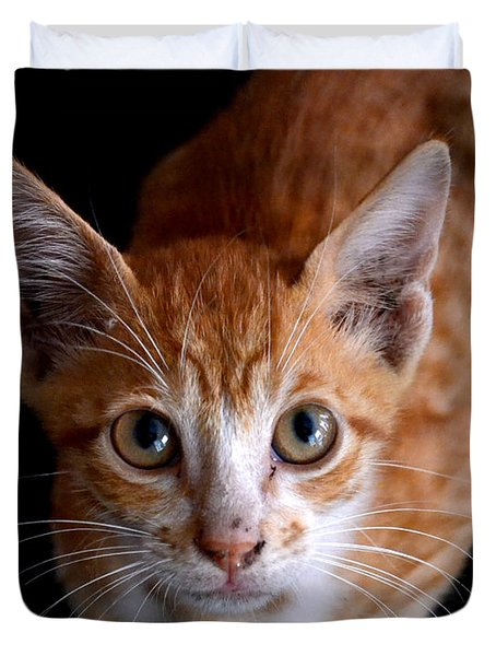 Cute Kitten Duvet Cover