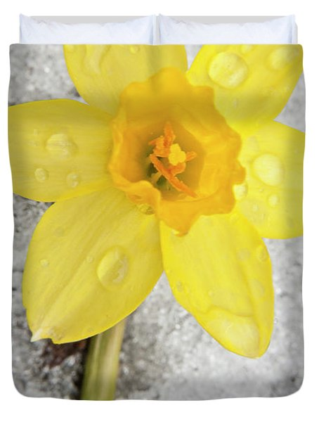 Daffodil In Spring Snow Duvet Cover by Adam Romanowicz