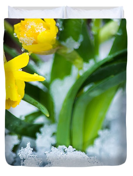 Daffodils In The Snow  Duvet Cover