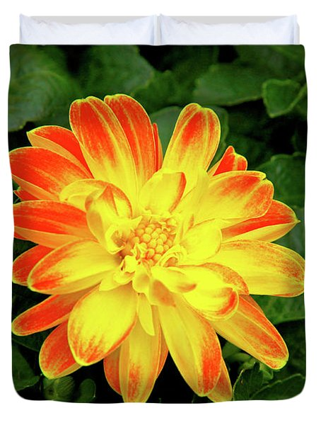 Dahlia Duvet Cover by Ed  Riche