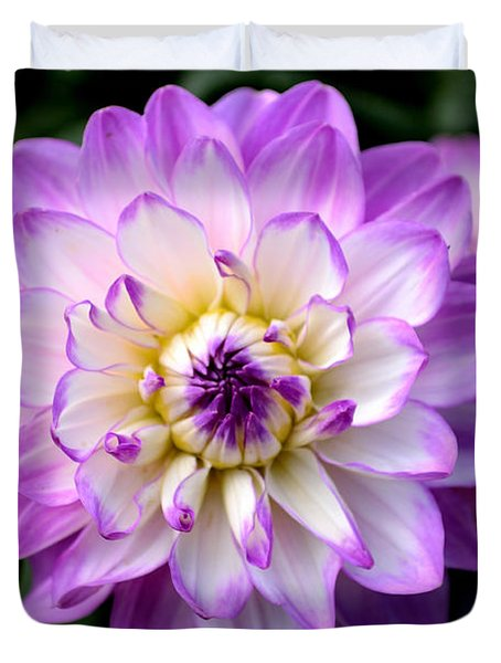 Dahlia Flower With Purple Tips Duvet Cover