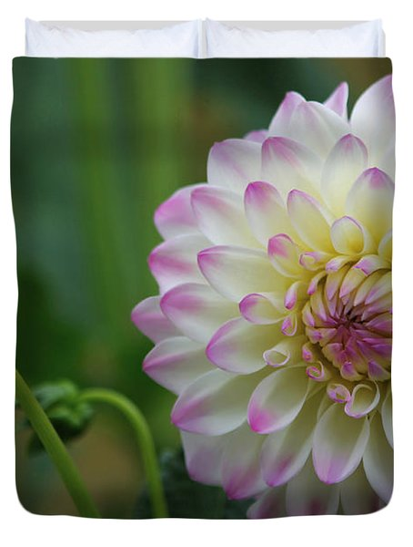 Dahlia In The Mist Duvet Cover by Jeanette C Landstrom