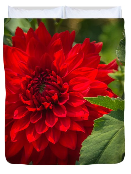 Dahlia Perfection Duvet Cover by Jane Luxton
