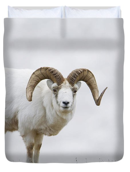 Dall Sheep Ram On Sheep Mountain Duvet Cover