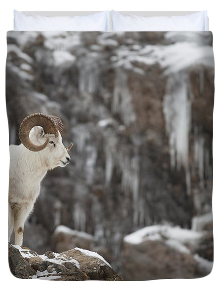 Dall Sheep Ram Stands On A Rocky Cliff Duvet Cover