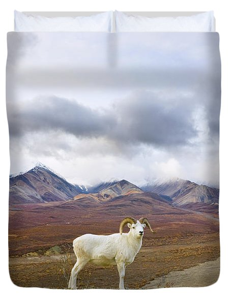 Dalls Sheep Ram Denali National Park Duvet Cover