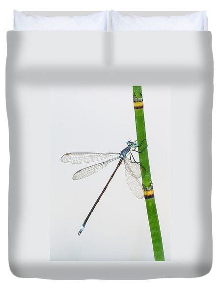 Damselfly On Horsetail Duvet Cover