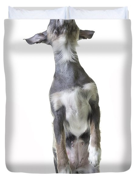 Dancing Dog Duvet Cover by Edward Fielding