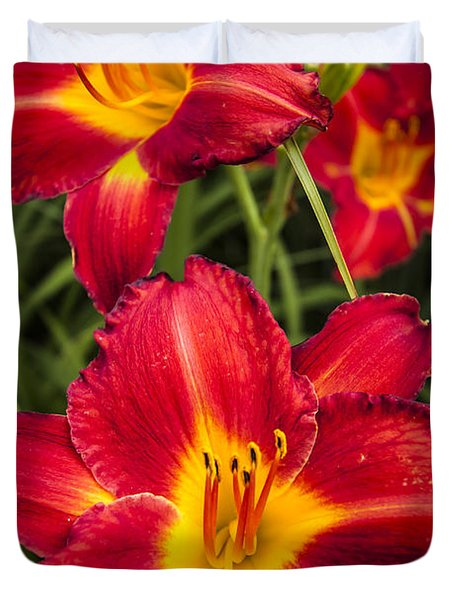 Day Lilies Duvet Cover by Adam Romanowicz