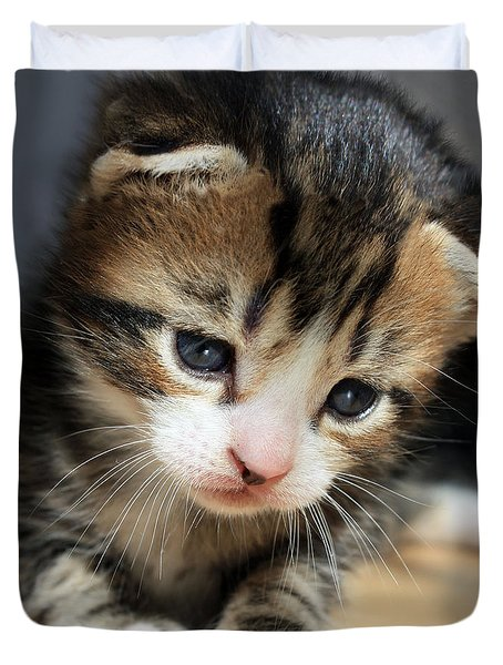 Duvet Cover featuring the photograph Daydreamer Kitten by Terri Waters