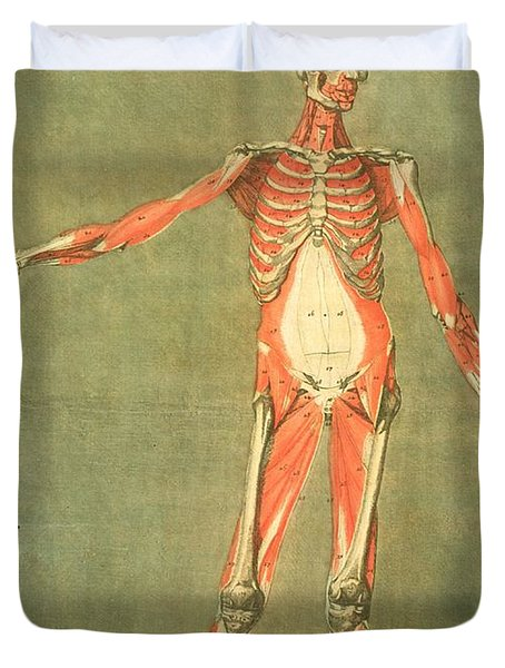 Deeper Muscular System Of The Front Duvet Cover by Arnauld Eloi Gautier D'Agoty