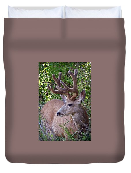 Buck In The Woods Duvet Cover by Athena Mckinzie