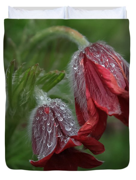 Dew Covered Pasque Flower Duvet Cover by Jane Luxton