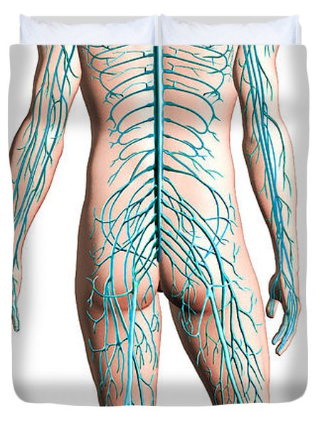 Diagram Of Human Nervous System Duvet Cover by Leonello Calvetti