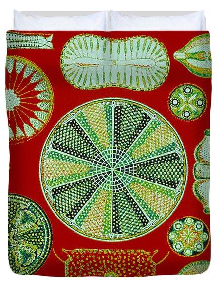 Diatoms-ernst Haeckel Duvet Cover by Scott Camazine