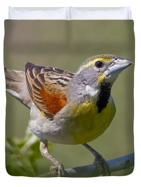 Dickcissel Duvet Cover by Gary Holmes