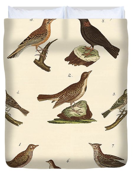 Different Kinds Of Larks Duvet Cover by Splendid Art Prints