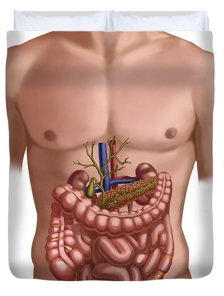 Digestive And Renal Systems Duvet Cover