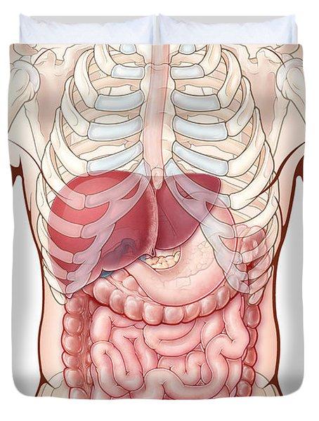 Digestive System, Illustration Duvet Cover