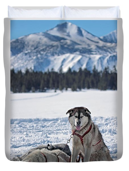 Dog Team Duvet Cover by Duncan Selby