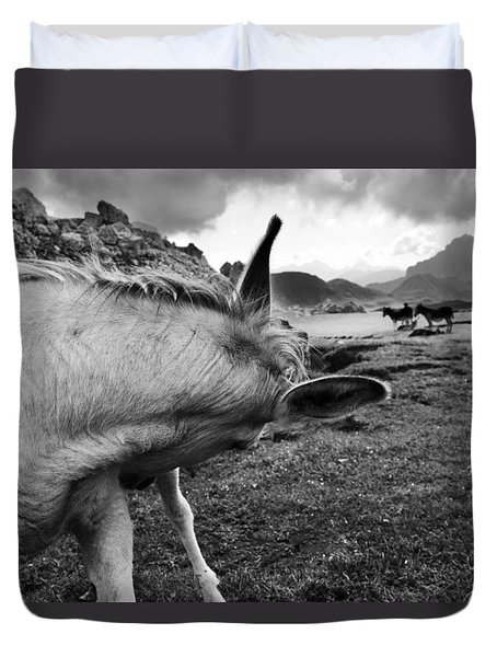 Donkeys Duvet Cover