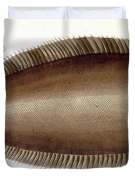 Dover Sole Duvet Cover by Andreas Ludwig Kruger