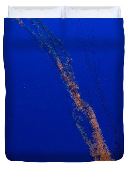Downward Facing Pacific Sea Nettle 1 Duvet Cover by Scott Campbell