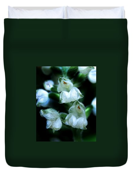 Downy Rattlesnake Plantain Orchid Duvet Cover by William Tanneberger