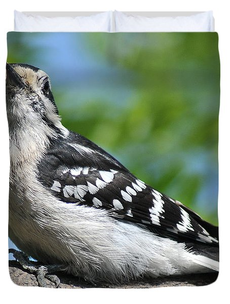 Downy Woodpecker 302 Duvet Cover