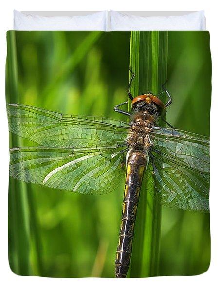 Dragonfly On Grass Duvet Cover