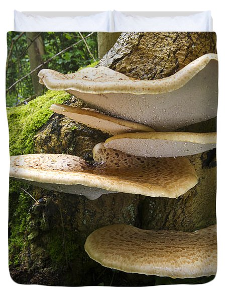 Dryads Saddle Mushrooms On Tree Trunk Duvet Cover by Edwin Rem