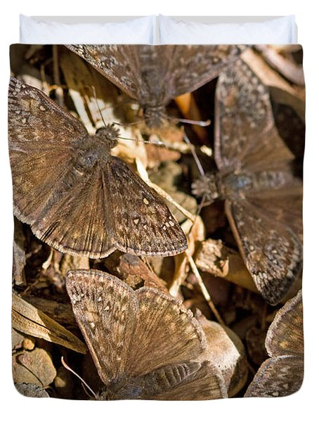 Duskywing Butterflies Duvet Cover by Melinda Fawver