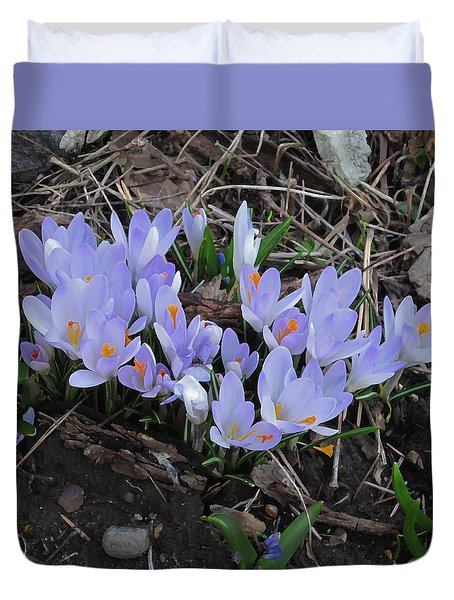Early Crocuses Duvet Cover by Donald S Hall