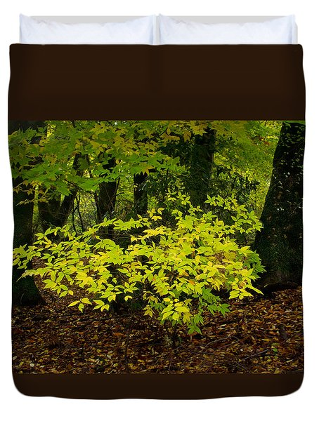 Early Fall In Bidwell Park Duvet Cover