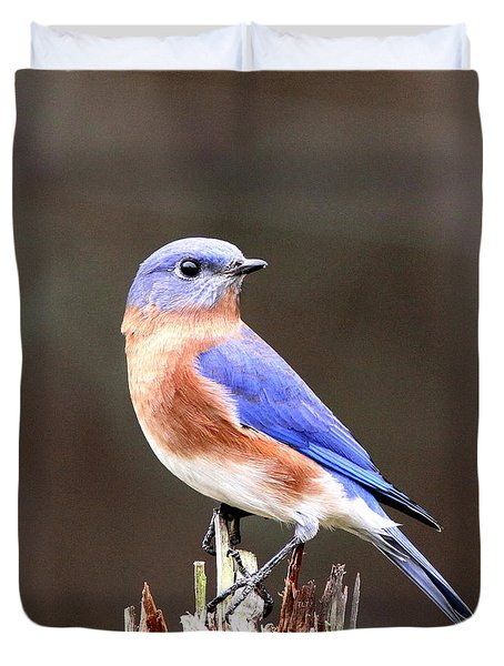 Eastern Bluebird - The Old Fence Post Duvet Cover