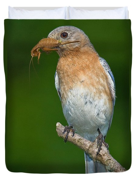 Duvet Cover featuring the photograph Eastern Bluebird With Katydid by Jerry Fornarotto