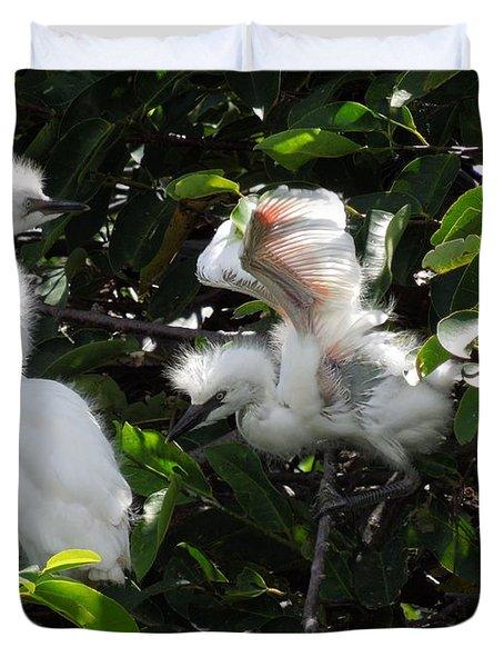 Egret Chicks Duvet Cover by Ron Davidson
