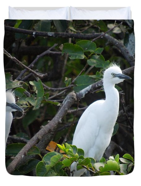 Egret Chicks Waiting To Be Fed Duvet Cover by Ron Davidson