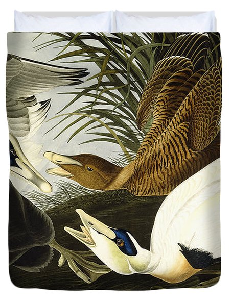 Eider Ducks Duvet Cover by John James Audubon